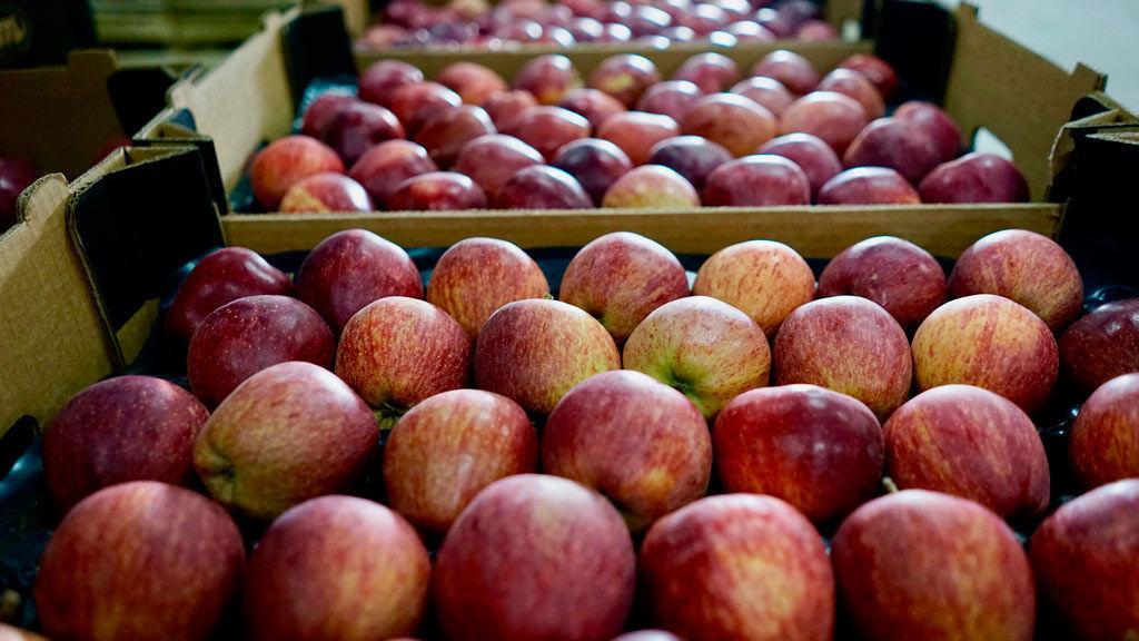 процесс хранения яблок